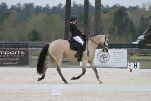 top dun in dressage arena