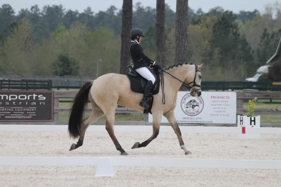 Exciting update from Stable View at the Spring Fever dressage show!