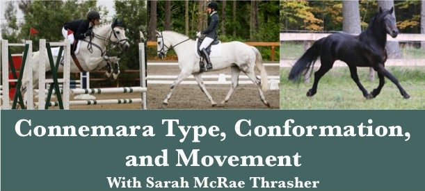 Read more about the article Connemara Type, Conformation, and Movement With Sarah McRae Thrasher