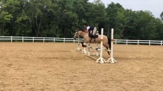 """Read more about the article Video: Carol Ann Pollard & Glendale's """"Queenie"""" Compete at Region 3 Show"""