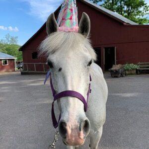 "Rose Vinson's horse ""Girlfriend"""
